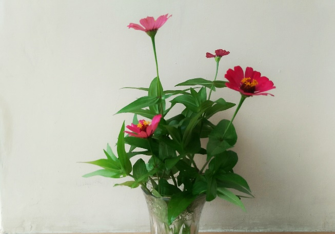 Picture Daisy in a Vase