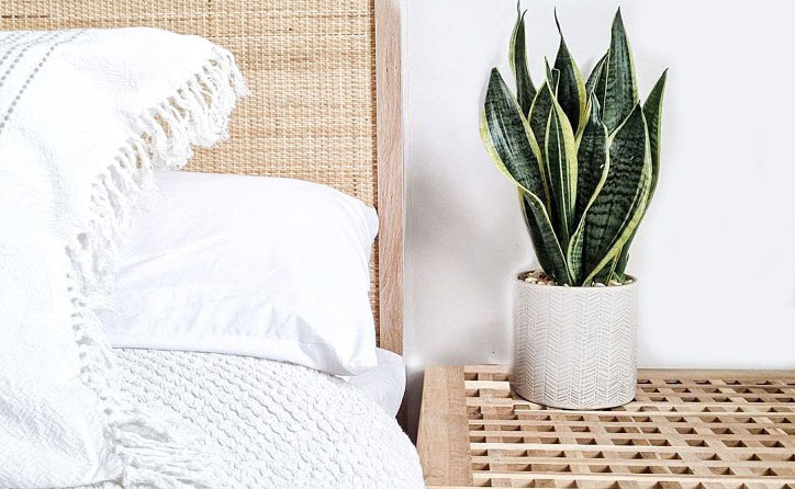 Snake plant benefits in the bedroom