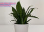 Snake Plant Signs