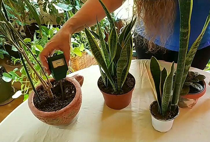 Snake plant moisture meter