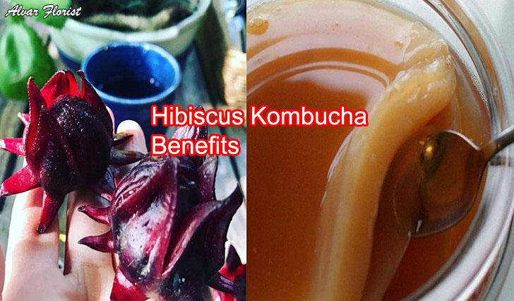 Hibiscus kombucha benefits
