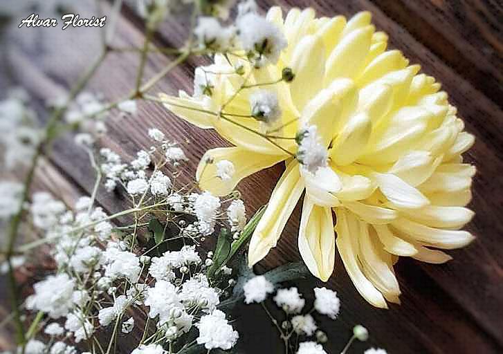 Chrysanthemums Blue