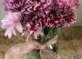 Where to Buy Chrysanthemums